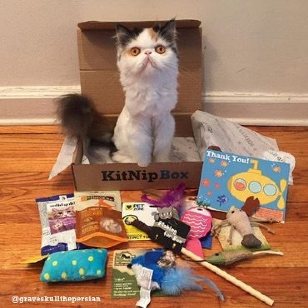 Kit Nip Box-Subscription for Cats and Unique Gifts for Pets by Gifter World